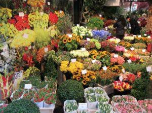 cosa vedere ad amsterdam mercato fiori galleggiante