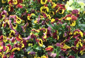 Cosa vedere ad Amburgo fiori