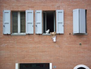 vivere a bologna nel quartiere lame