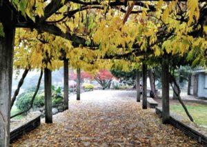 Cosa fare a Torino ammirare foliage