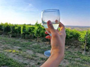 degustazione vino al jazz festival di zola predosa